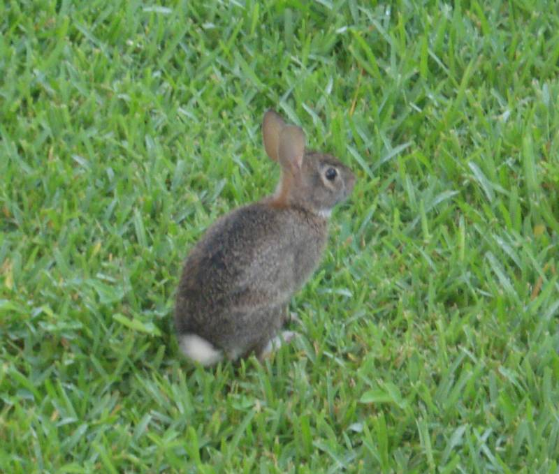 A bunny visitor to the gardens