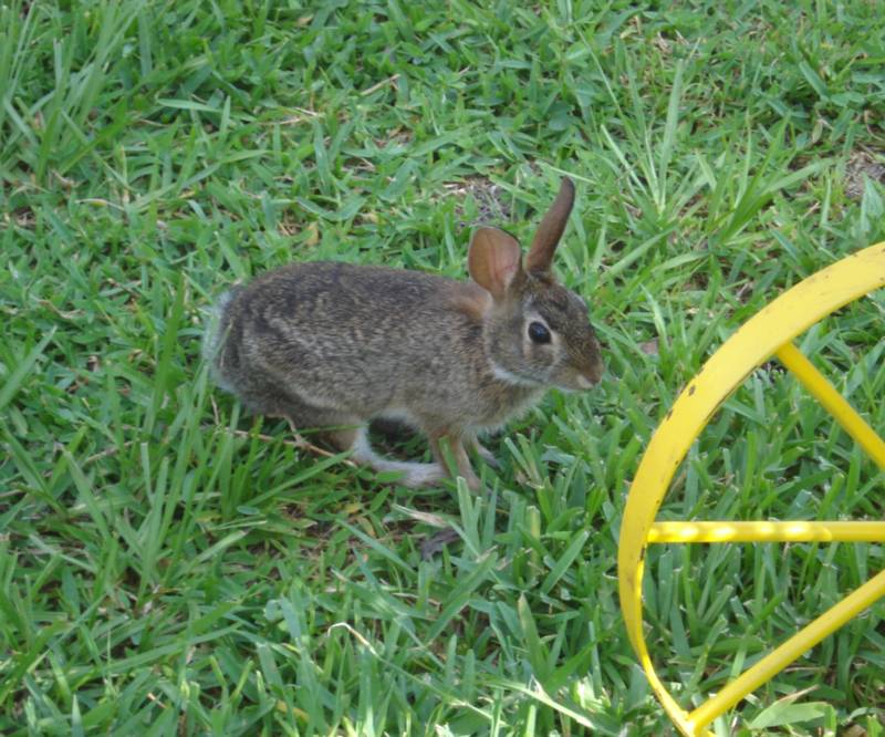 Another picture of the Garden Bunny