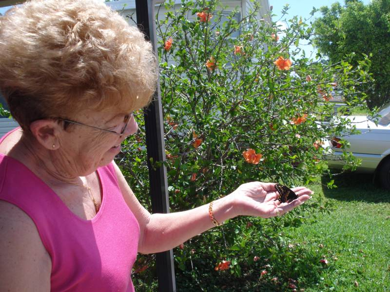 Judis Mom releasing a Black Swallowtail