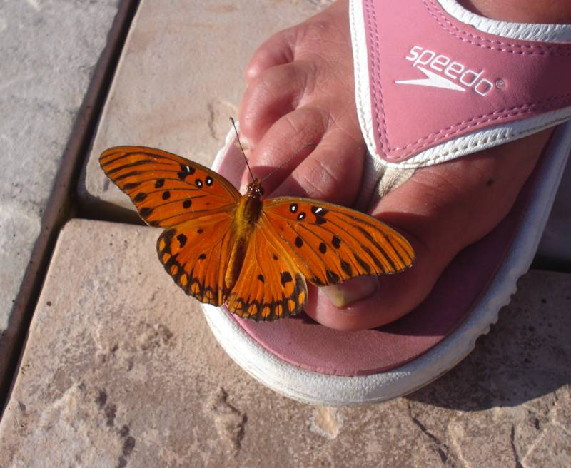 Gulf Fritilliary landed on Judis toes