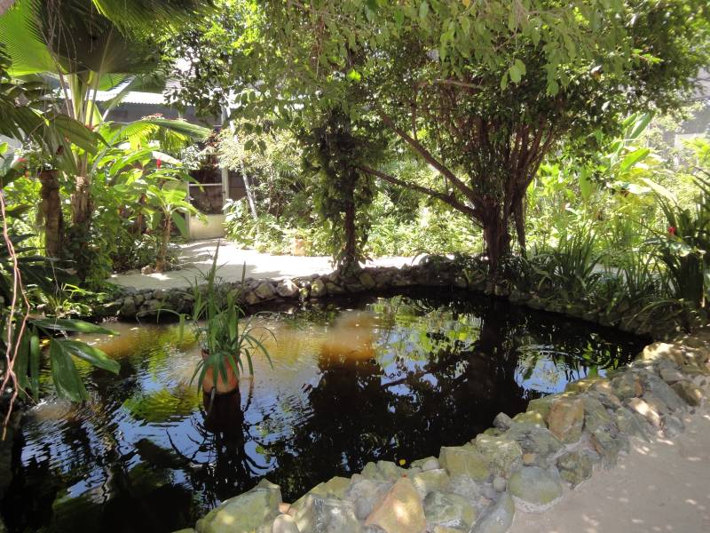 Inside View - Pond
